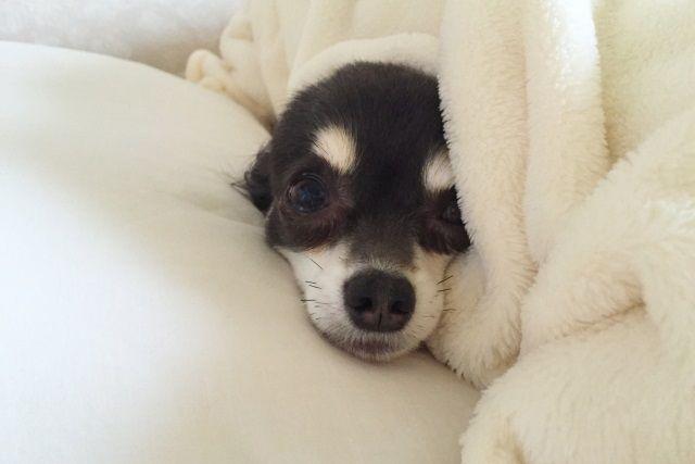 ベッドが寒い