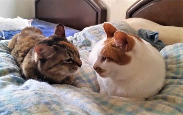 二人用ベッド